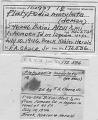 View Platypodia maculata digital asset number 2