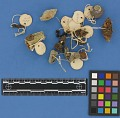 View Botanical Specimens From Quileute Indians digital asset number 12