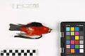 View Scarlet Tanager digital asset number 2