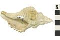 View Fossil Snail digital asset number 2
