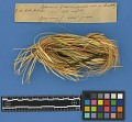 View Botanical Specimens From Quileute Indians digital asset number 9
