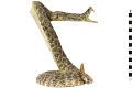 View Eastern Diamondback Rattlesnake digital asset number 8