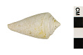 View Cone Shell digital asset number 1