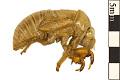 View Cicada digital asset number 0