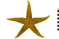 View Common Sea Star, Starfish digital asset number 0