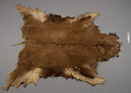 View Buffalo Robe, Quill Decorated digital asset number 1