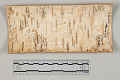 "View Etched Birchbark ""Pictograph"" digital asset number 1"