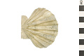 View Fossil Scallop digital asset number 0