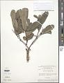 View Qualea parviflora digital asset number 1