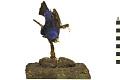View Blue Grosbeak, Blue Grosbeak digital asset number 0