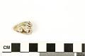 View Mollusk Egg Case digital asset number 5