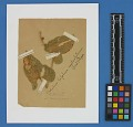 View Botanical Specimens From Quileute Indians digital asset number 17