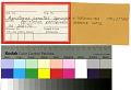 View Apristurus parvipinnis Springer & Heemstra digital asset number 0