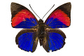 View Leafwing Butterfly digital asset number 2