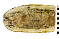 View Ray-finned Fish digital asset number 2