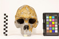 View Zhoukoudian, Early Human, Fossil Hominid digital asset number 11