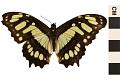 View Malachite Butterfly digital asset number 0