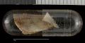 View Sciurus aureogaster nigrescens digital asset number 7