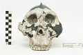View OH 5, Fossil Hominid, Fossil Hominid digital asset number 4