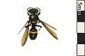 View Weevil Wasp digital asset number 0