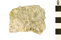 View Stony Coral, Stony Coral digital asset number 1
