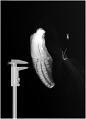 View Stenella clymene (Gray, 1850) digital asset number 0