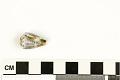 View Mollusk Egg Case digital asset number 0