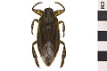 View Giant Water Bug digital asset number 2