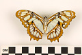 View Malachite Butterfly digital asset number 1