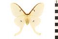 View Luna Moth digital asset number 0