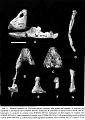 View Chelychelynechen quassus Olson & James, 1991 digital asset number 2