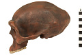 View Zhoukoudian, Early Human, Fossil Hominid digital asset number 2