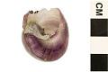 View Purple Bubble Raft Snail digital asset number 4