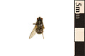 View Stable Fly digital asset number 0