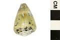 View Mollusk Egg Case digital asset number 1
