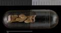 View Callosciurus prevostii melanops digital asset number 3