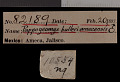 View Pappogeomys bulleri amecensis Goldman, 1939 digital asset number 0