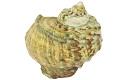 View Great Green Turban, Great green turban shell digital asset number 0
