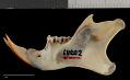View Sciurus aureogaster nigrescens digital asset number 3