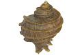View Murax Snail digital asset number 0