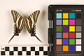 View Zebra Swallowtail, Zebra Swallowtail digital asset number 1
