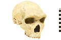 View Petralona 1, Fossil Hominid digital asset number 0