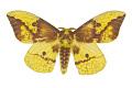 View Imperial Moth digital asset number 0