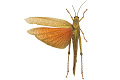 View Giant Grasshopper digital asset number 2