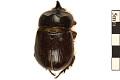 View Unicorn Beetle, Rhinoceros Beetle digital asset number 0