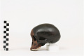 View Taung Child, Fossil Hominid digital asset number 3