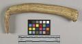 View Bone Handle For Scraper digital asset number 4
