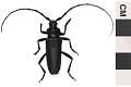View Long-horn Beetle digital asset number 0