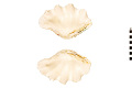 View Fluted Giant Clam digital asset number 1