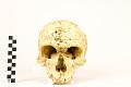 View La Chapelle-aux-Saints, Neanderthal Man, Fossil Hominid digital asset number 11
